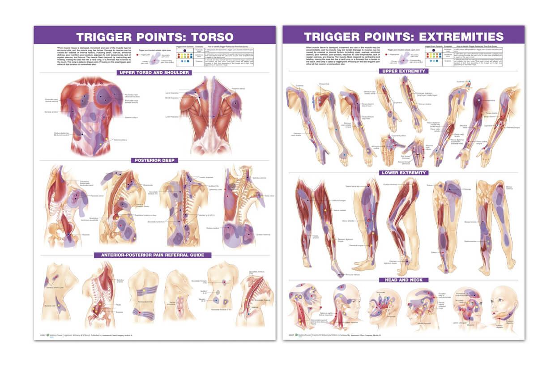Sada plakátů - spouštěcí body těla