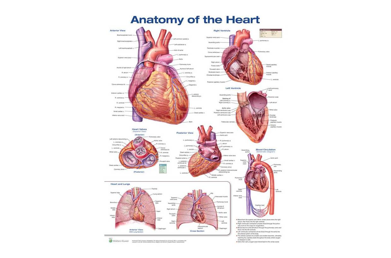 Srdce 50x67cm