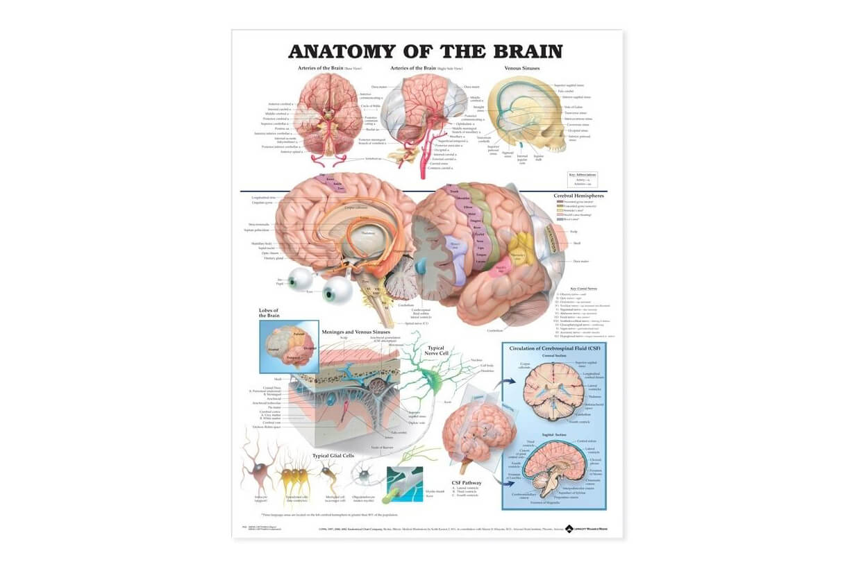 Mozek 50,8x66cm