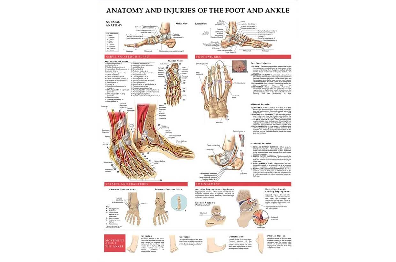 Zranění nohy a kotníku 50,8x66cm