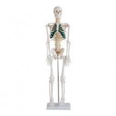 Středně velká kostra s míšními nervy, výška 85 cm